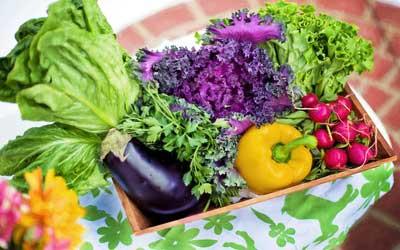 verdruas hortalizas