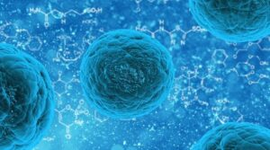 sistema inmune bacteria